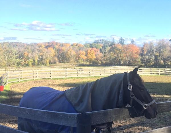 River Horse Farm Community Solar Image 2